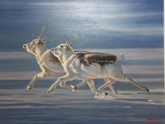 Perry Caribou